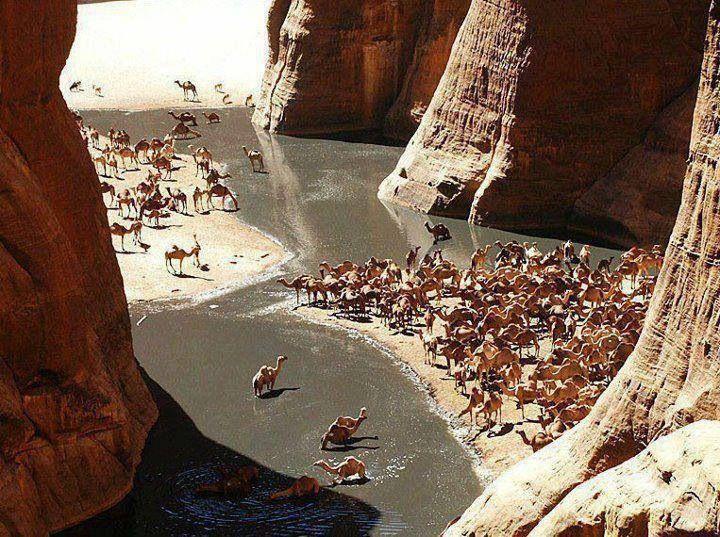 Camel valley ..Marsa Allam, Egypt