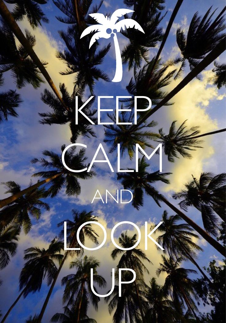 keep calm and look up / created with Keep Calm and Carry On for iOS #keepcalm #palmtree