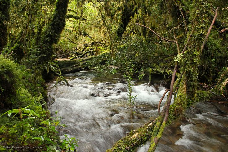 This is near the start of the the Enchanted Forest Trail, or the Sendero Bosque Encantado, in Queulat National Park..
