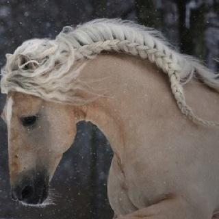 A real beauty!! Palomino horse