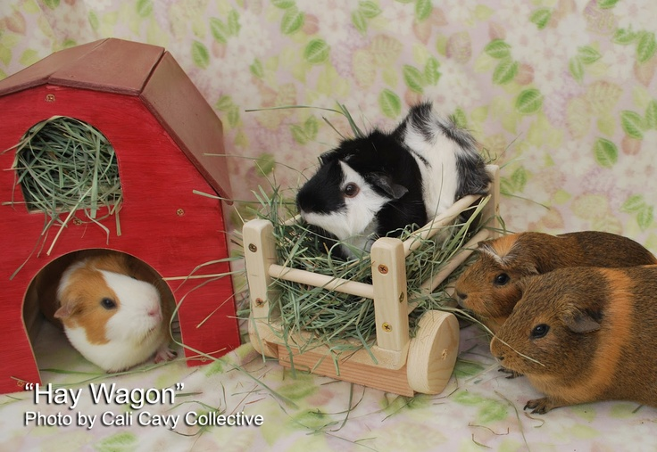 Wooden hay wagon for guinea pigs