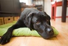 10 trucs pour dresser un chien