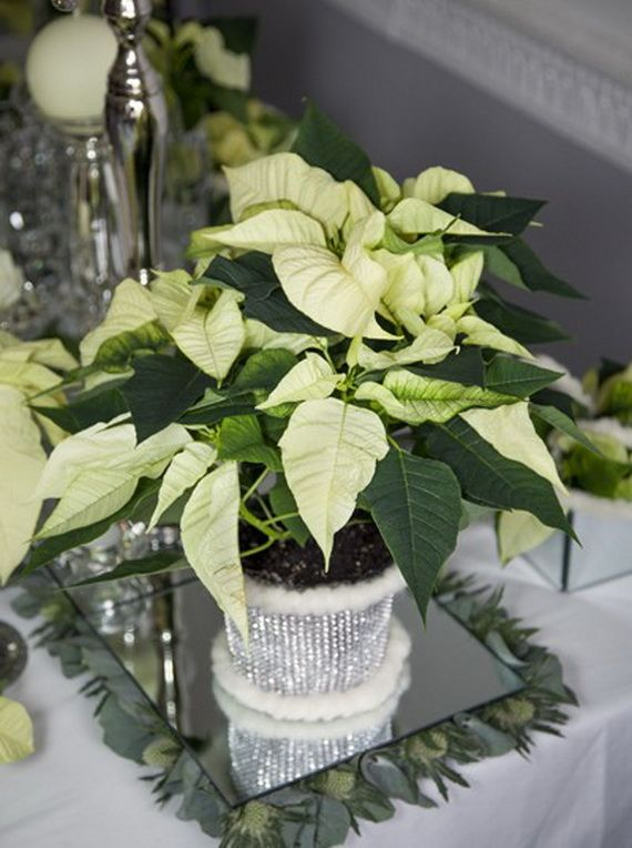 Decorate Christmas with 45 ideas poinsettias the holidays most loved plant  Family Holiday