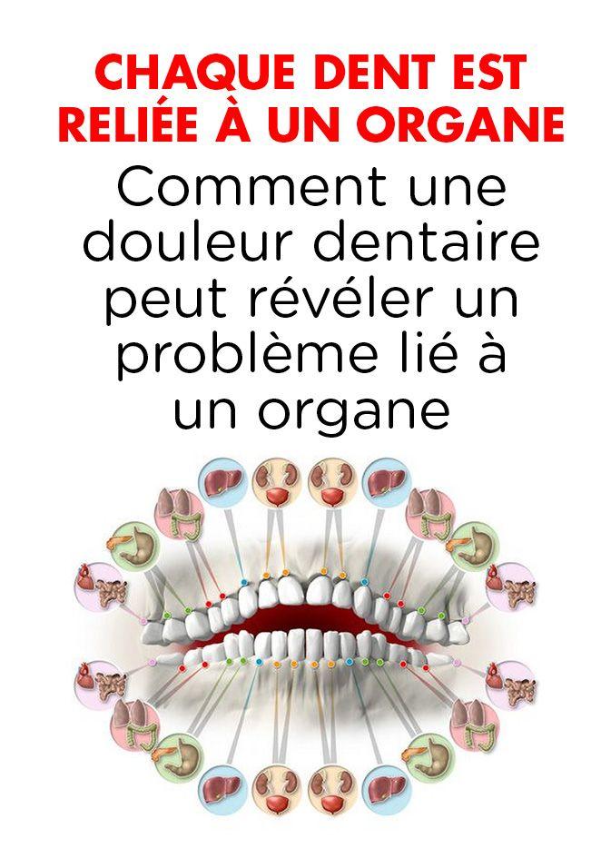 Chaque dent est reliée à un organe – Comment une douleur dentaire peut révéler un problème lié à un organe