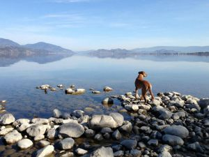 We've got you and your pooch covered for things to do during your stay at our Kelowna Hotel! #bwkelowna http://www.bestwesternkelownahotel.com/blog/okanagan-attractions/pet-friendly-kelowna-hotels-and-attractions-for-your-pooch.html