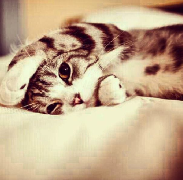 Super cute kittens and other awesomely cute animals | Awesomely Cute, Cute