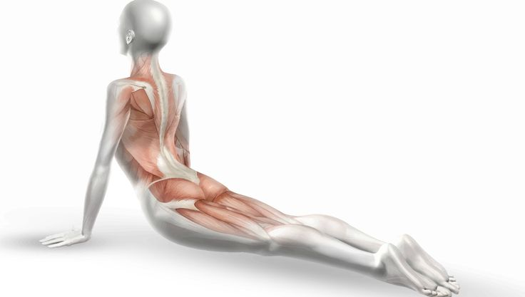 To understand the function of fascia is to understand how the body moves…