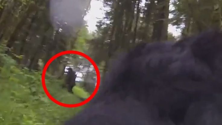 A dog wandering in the woods with a camera strapped to him may have just answered the question, is Bigfoot real? You have to see this incredible video! Take a look and decide for y...