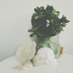 Vignette of white and green