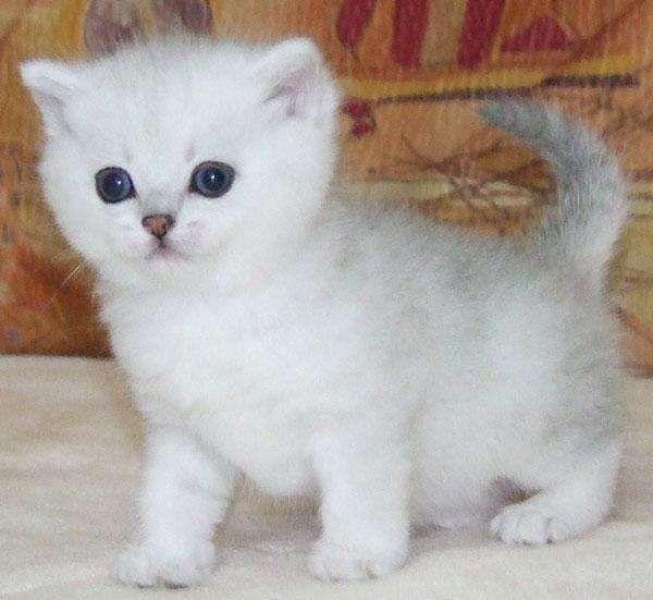 311b25ed3fbe6 48 melhores imagens de Fave animals no Pinterest   Animais bonitos ...