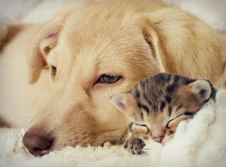 Hoe kun je makkelijk haren van huisdieren verwijderen? 7 tips! http://dejlig.nl/haren-van-huisdieren-verwijderen/