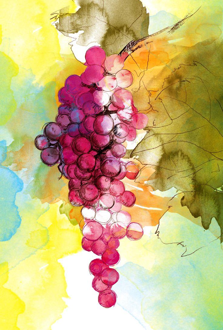 #grapes #autumn #digital #watercolour