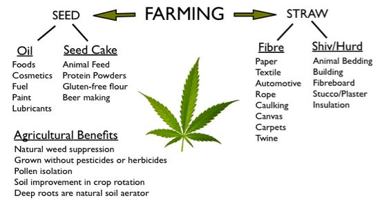 the uses and benefits of industrial hemp Benefits of industrial hemp industrial hemp (which is not the same as medicinally and recreationally-used marijuana) was grown commercially in the us until the 1950s.