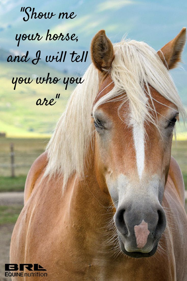Pics photos quote i wrote for my horse com account s equestrian - Best 25 Inspirational Horse Quotes Ideas On Pinterest Horse Riding Quotes Riding Quotes And Horse Quotes