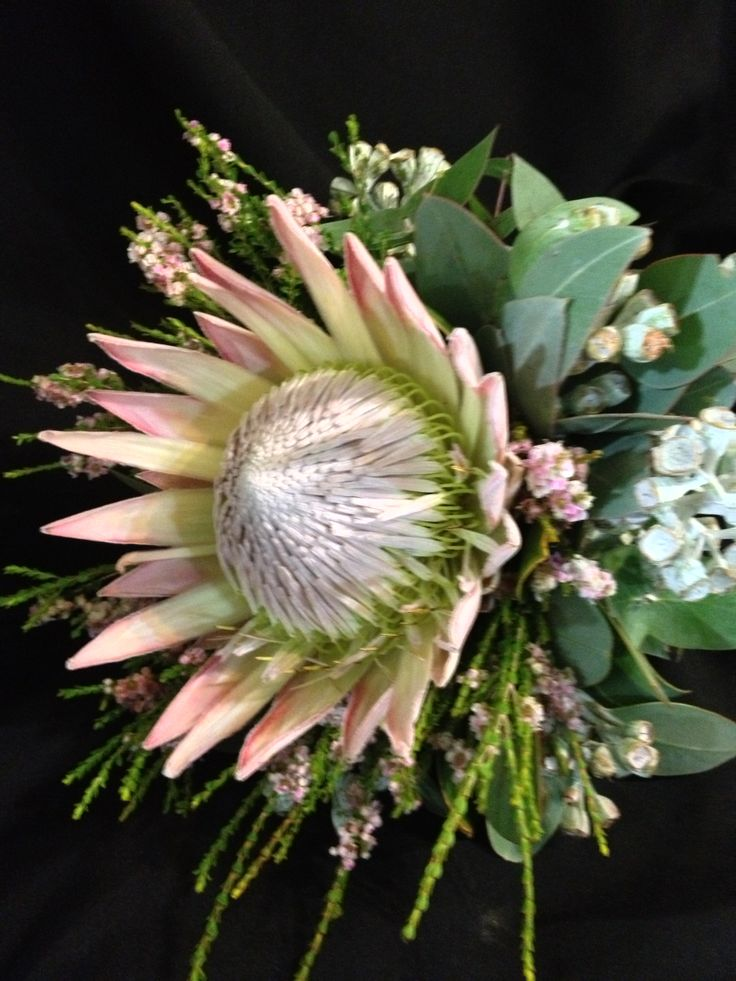 single bloom of king protea with gum nuts bridesmaids
