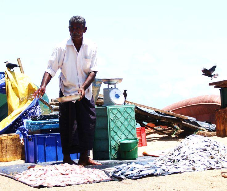 een visverkoper op de vismarkt bij Galle, Sri Lanka