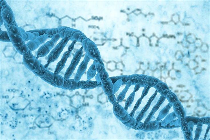ジャンクDNAはガラクタじゃない! どうやら背骨に関係が…   やっと目が付けられたのがOCT4の周辺にあるジャンクDNA。ヘビのOCT4周辺のジャンクDNAを、通常のマウスの胚のOCT4周辺につなぎ合わせたところ、このマウスは通常より多い脊髄を形成したのです。この実験から、ジャンクDNAには、体を形成する上で何らかの役目があるのではという新たな説を発表することになりました。   進化、変化は、1つのDNAだけで起こるのではなく、その周辺領域が引き起こすというのが、注目すべきところ。