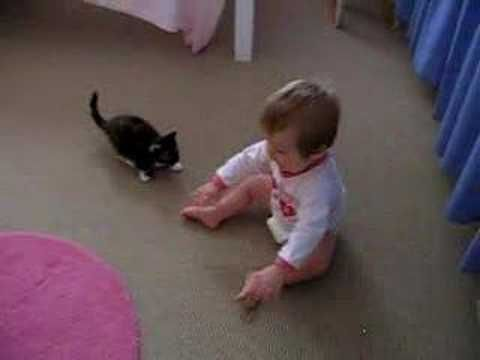 Kitty Pounces On Baby | The Animal Rescue Site Blog