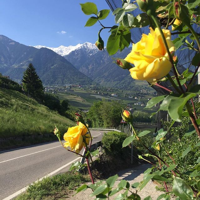 Beautiful Southtirol! So many flowers, mountains and even palm trees! Where is your next trip going to? Maybe you want to join me in August for the @xperiencefestival ? For Yoga, music, vegan food and much more, they have a special price available till the 8th of May. All infos here: http://www.xperience-festival.de