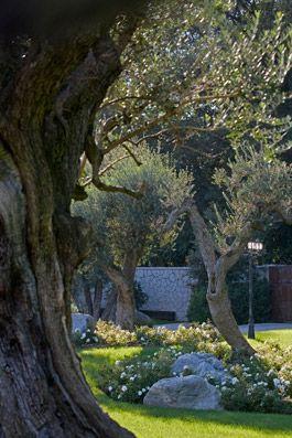 Giardino a Camparada - Foto di Dario Fusaro