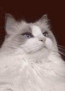 I laughed way to hard at this, hahahaha!!!! This cat is just like, give me that.....omg, wtf just happened?!?!?!