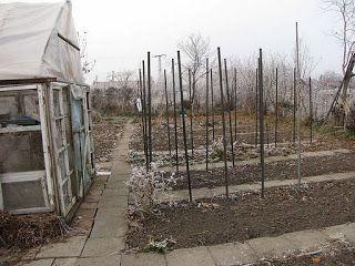 Ajánljuk: Ősz vége a kertben., http://kertinfo.hu/osz-vege-a-kertben/, ezekben a témakörökben:  #Fűszer #hagyma #Kert #Konyhakert #Mag #Tanácsésötlet #tervek #Vetőmag #zöldborsó, írta: Ilkertje