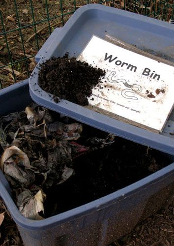 "By the way, you can also ""vermicompost"" – shred your newspapers, and chop up non-meat/fatty kitchen scraps, plus eggshells and coffee grounds, and put them in a large sweater box full of ""red wriggler"" worms, for the finest compost on earth. Don't worry - it only smells like wet paper."