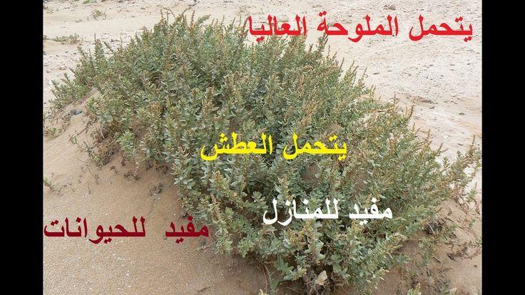 نبات الفوائد العظيمة لكل إنسان معا لنتعرف علية حلقة 370 Plants Herbs