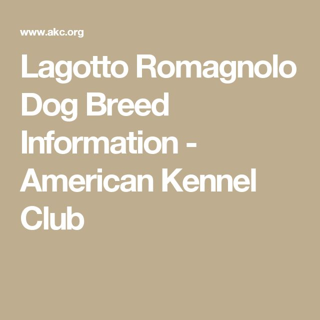 Lagotto Romagnolo Dog Breed Information - American Kennel Club