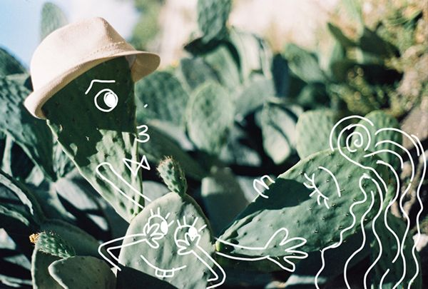 cactus family / drawing on 35mm film photo
