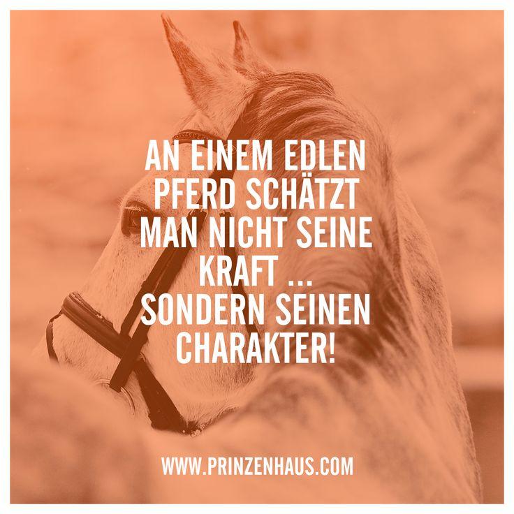 www.prinzenhaus.com AN EINEM EDLEN PFERD SCHÄTZT MAN NICHT SEINE KRAFT... SONDERN SEINEN CHARAKTER!
