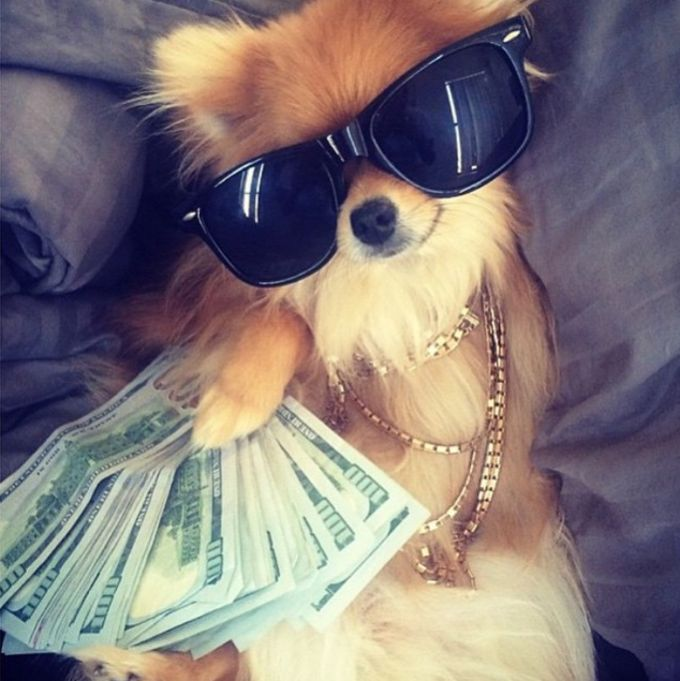 How Much Americans Spend on Pets is Holy Shih Tzu http://tipsycat.com/2016/05/how-much-americans-spend-on-pets-is-holy-shih-tzu/