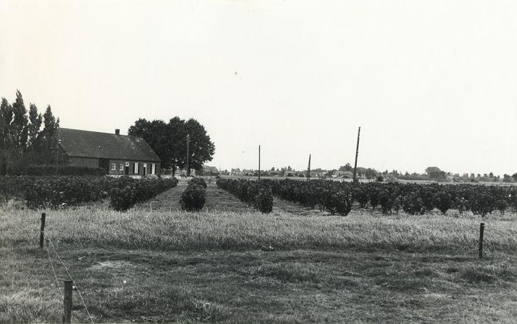 Langgevel boerderij van de familie H, van Eijk. In 1932 woonde hier nog de familie van Veldhoven. Op de achtergrond zijn de huizen van de Floreffenstraat te zien. Anno 2014 is hier een wijk gebouwd en is er niets meer over van de weidsheid van deze foto.. Auteur: Heuvel-Remery, J. van den - 1961 - 1961