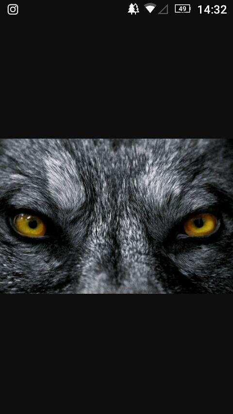 #wattpad #hombres-lobo Cuando un trio de amigos decide salir a explorar el bosque una noche de luna llena , algo inesperado le sucede a uno de ellos , algo que cambiara sus vidas para siempre Si te gusto Teen Wolf o los hombres lobos en General , Esta es tú historia Tiene La pizca apropiada de romance , hombres Lobo , dr...