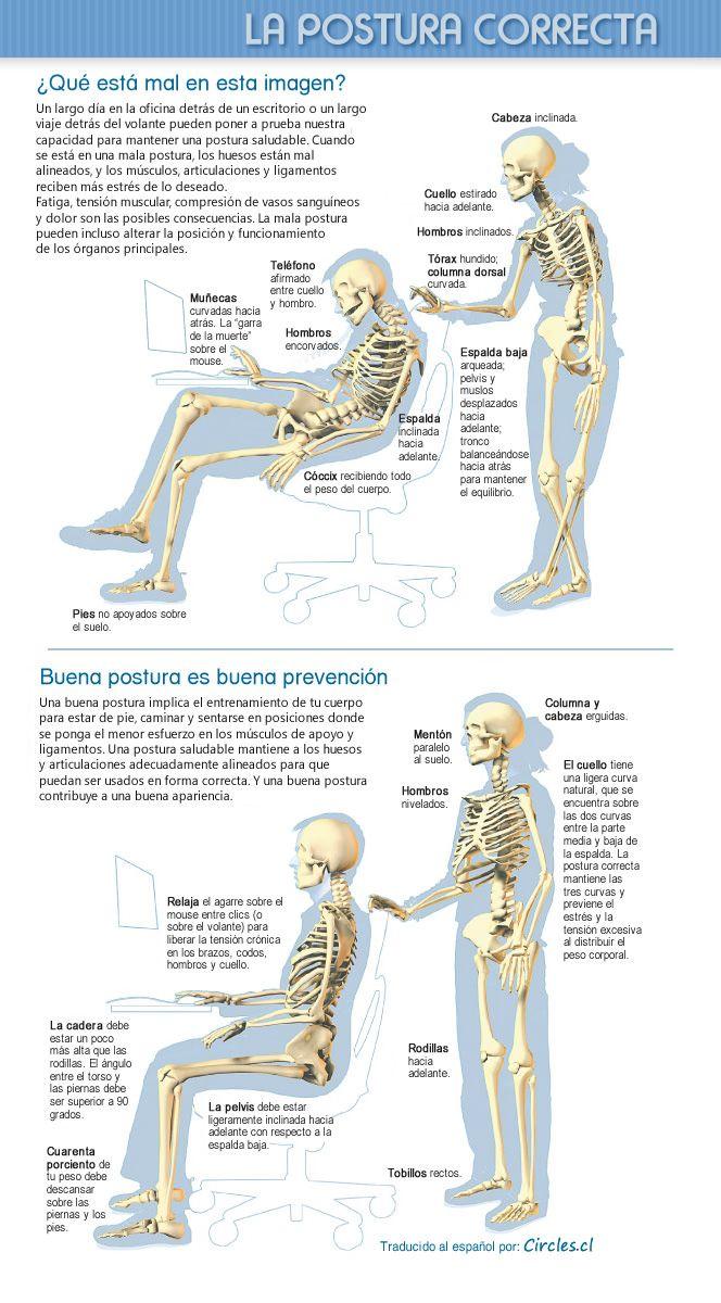 La postura correcta, una buena postura es una buena prevención - Infografía traducida al español por Circles.cl