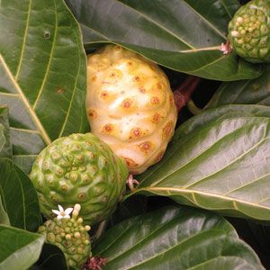 Noni Fruit  This fruit is another strange looking specimen. A ripe noni fruit is a yellowish white color and the exterior is covered in brown circular spots. Although noni fruits are known for their health benefits, they smell bad and they don't taste much better.