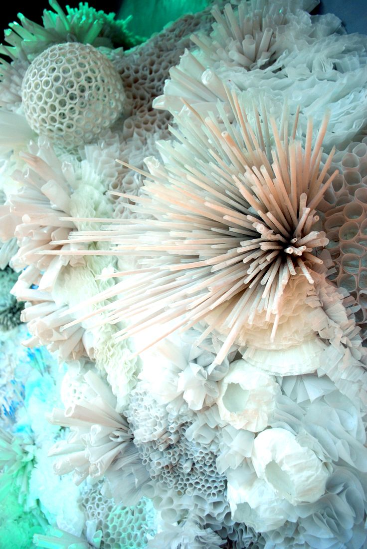 coral & sea urchins