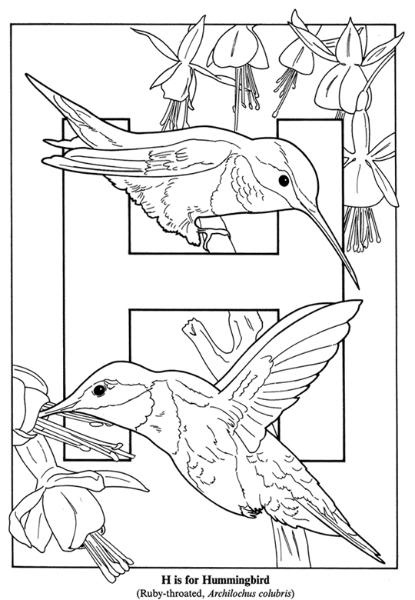 nature h is for hummingbird image by tharens photobucket coloring for adultsadult coloring pagescoloring