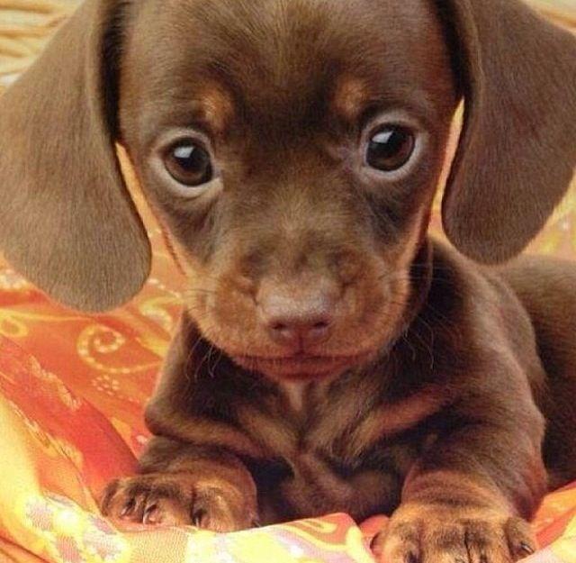 So tiny~<3~adorable