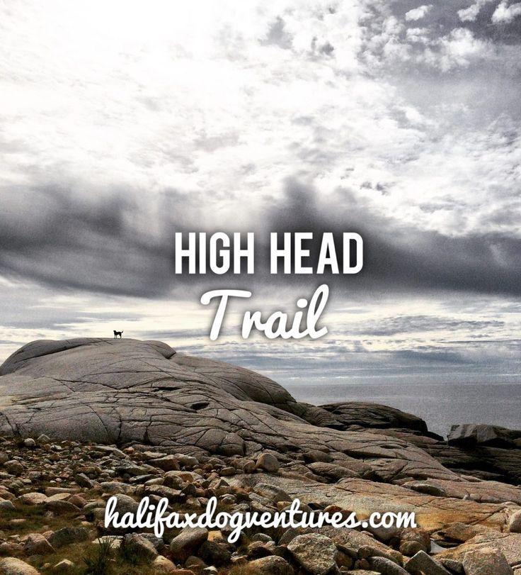 High Head Trail in Prospect, NS might be HRM's best kept (dog-friendly) secret. halifaxdogventures.com