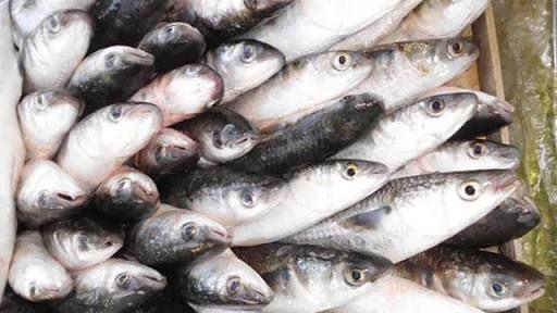 Yüksek miktarda kaliteli protein, vitamin ve mineral içeren balıklar aynı zamanda Omega-3 yağ asitlerinin en kaliteli kaynağı. Içerdiği yağ asitleri sayesinde bağışıklık sistemini kuvvetlendirerek…