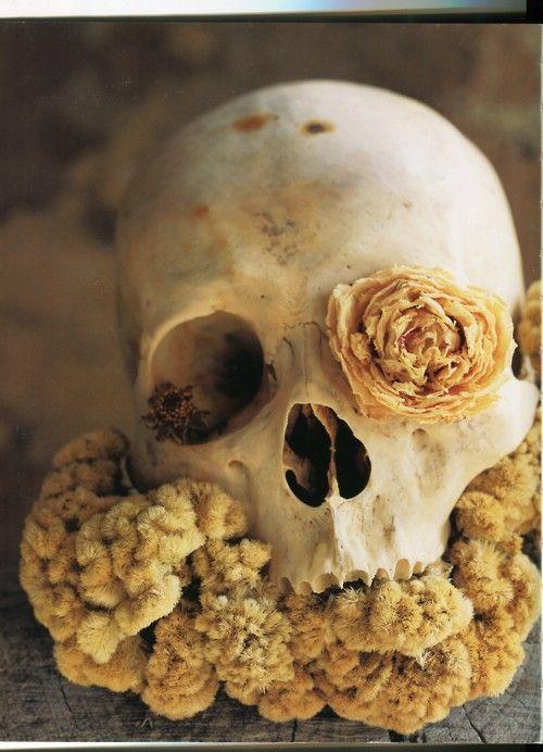 SkullSkull, Floral Design, Bloom Magazines, Bones, Beautiful, Art, Skeletons, Dry Flower, Yellow Flower