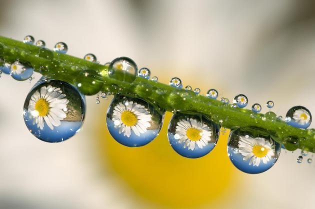 Dew Drops_11