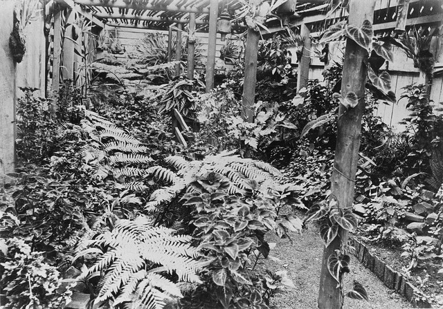 Fernery on Dulacca Station, Western Queensland by State Library of Queensland, Australia, via Flickr
