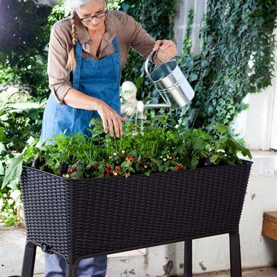 Keter 212157 easy grow elevated garden bed this on sale at sams club for 88 love this diy Keter easy grow elevated flower garden planter