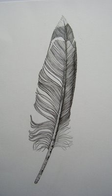 drawings of feathers -