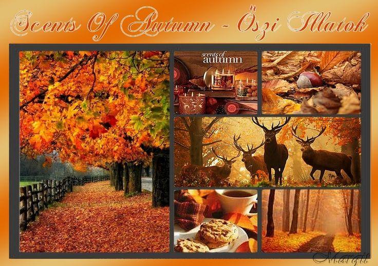 Photo montage 49. autumn inspirations 03. - Őszi illatok    forrás: margitanyakepeslapjai.bloglap.hu