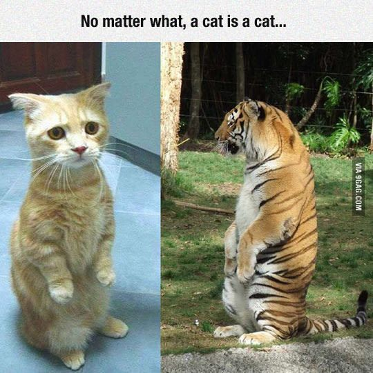 Just the way they are. - 9GAG