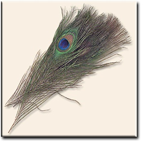 Fly Tying Feathers - Fly Patterns - Fly Tying-Fly Tying Club - Fly Shop Fly Fishing Online Store