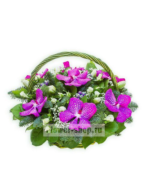 Крупные орхидеи малинового цвета окружены пушистыми иголочками еловой хвои и нежной россыпью белых кустовых роз и тюльпанов.